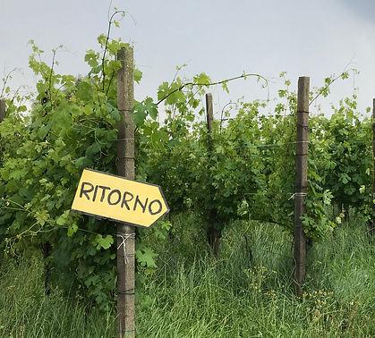 IMG_3363_Retorna Vines_crop4.jpg