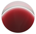 Enfer_Wine in Glass.png
