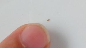 افترض أفلام مشرق حشرة صغيرة جدا في المنزل Dsvdedommel Com