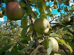 Journée Jus de Pomme 2020