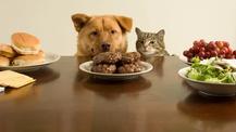 ¿Cuáles son los alimentos prohibidos para perros y gatos?