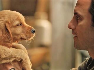 Mi Amigo Enzo una historia digna de un perro extraordinario