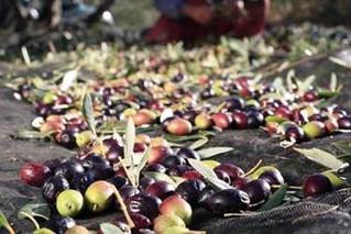 #AhoraEsBuenMomento de saber que menos acidez significa un mejor aceite de oliva