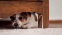 Ayuda a tu perro ante los fuegos artificiales