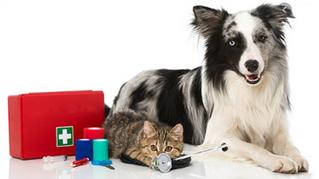 Cómo actuar con tu mascota en emergencia o desastre natural