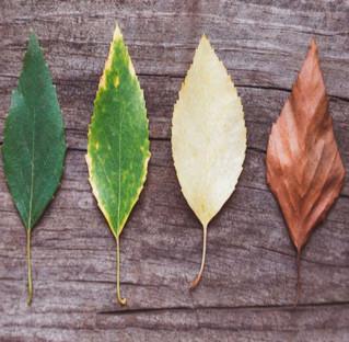 Llegó el otoño, ¿cómo proteger tu piel del cambio de clima?