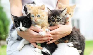 7 cosas que seguro no sabías de tu felino.