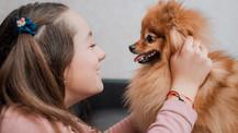 Pasos para un buen cepillado de dientes en tu perro