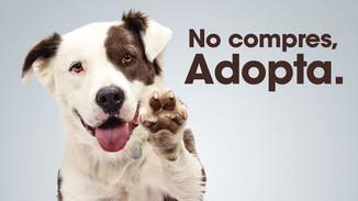 Mitos y realidades sobre la adopción de perros