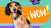 Las almohadillas de tu mascota