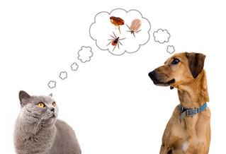 Fundamental proteger a mascotas de pulgas y garrapatas