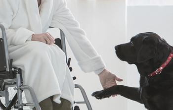 """""""Juntos es Mejor"""", terapias asistidas con perros a niños, adolescentes y adultos"""