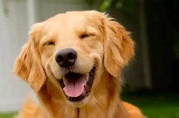 3 indicadores de la felicidad de tu lomito