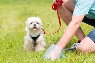 Las heces de tu perro, un reflejo de su salud ¡revísalas!