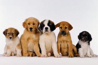 ¿Tendrás un cachorro por primera vez? Aprende a cuidarlo