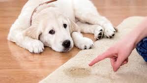 5 tips para enseñar a tu perro a ir al baño