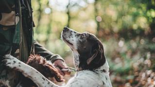 ¿Sabes reconocer el amor incondicional de tu mejor amigo?