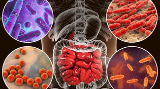 Papel de microbiota en adultos y recién nacidos