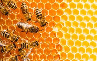 Restaurantes Toks apoya al desarrollo y el cuidado de las abejas