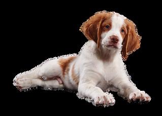 ¿Qué debe tener un kit de emergencia para tu mascota?