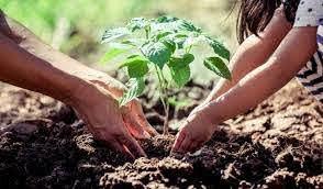 NEUBOX usa la tecnología para plantar más de 10,000 árboles