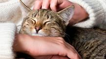 ¿El ronroneo de los gatos tiene beneficios para los humanos?