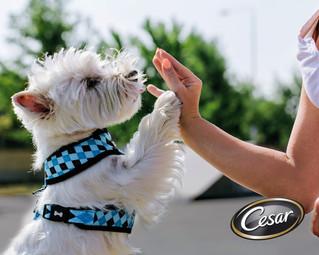 ¿Cambio de clima?... Consejos para proteger a tu perrito.