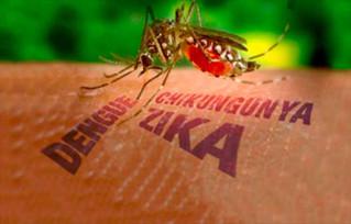 En las playas y con las lluvias, cuidado con los  mosquitos