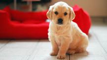¿Nuevo cachorro en casa? bienvenido