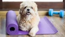 Ejercítate en compañía de tu mascota con estos 5 tips