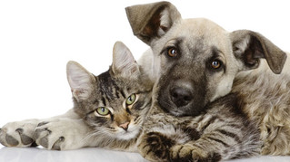 Ofrece una mejor calidad de vida a tus mascotas a través de la esterilización