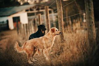 Los perros callejeros en México necesitan héroes