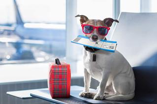 De vacaciones con tu perro? Tips para disfrutarlas
