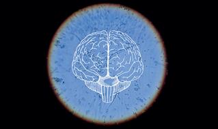 Virus del resfriado común y del herpes combaten tumores cerebrales malignos