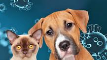 ¡Guau! Los perros no contagian COVID-19