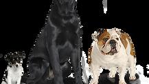 Alergias más comunes en mascotas y cómo identificarlas
