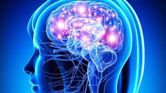 Estudian mecanismo involucrado en recuperación de memoria