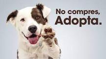 Seis razonos para adoptar a un animal sin hogar