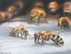 pastel bees