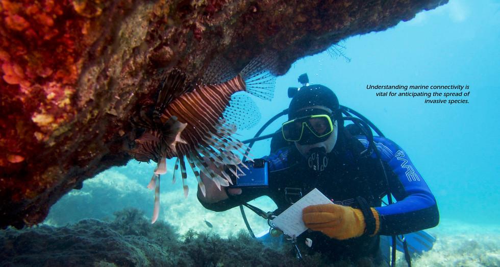 Observing invasive lionfish