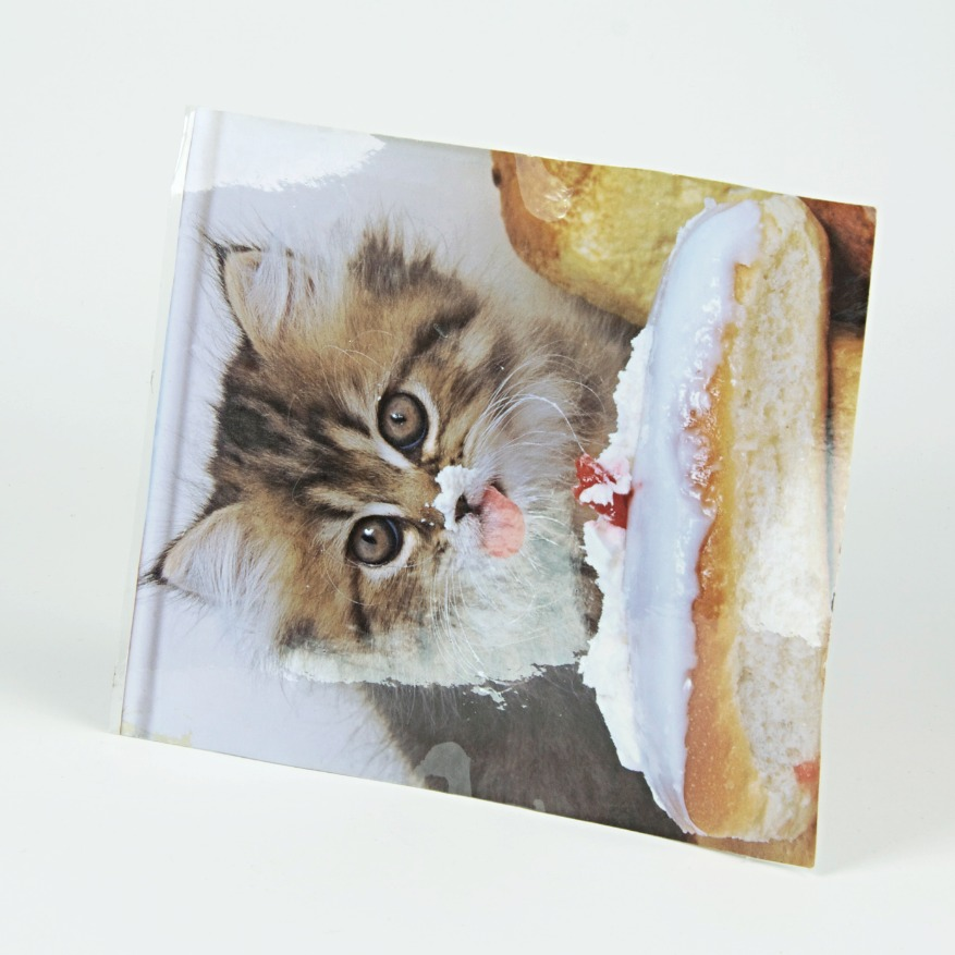 Cat eating a bun laminated image