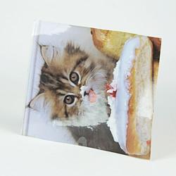 Cat eating a bun laminated image