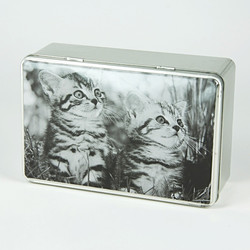 Distracted kittens tin