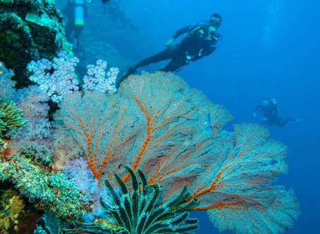 The unspoilt beauty of the Rowley Shoals.....