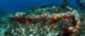 CKC Eco Abrolhos Abrolhos Island Images