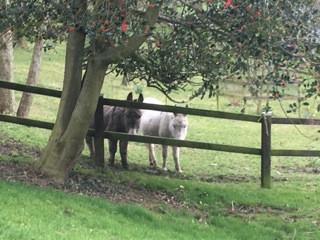 donkeys12.jpeg
