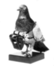carrier-pigeon2.jpg