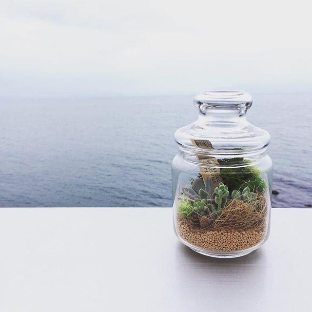 succulent terrarium__二子玉→浜松に移動中。_只今黄昏時の駿河湾を見ながら休憩。さて残り100K頑張ろう。__#駿河湾 #テラリウム #多肉植物 #terrarium #succu