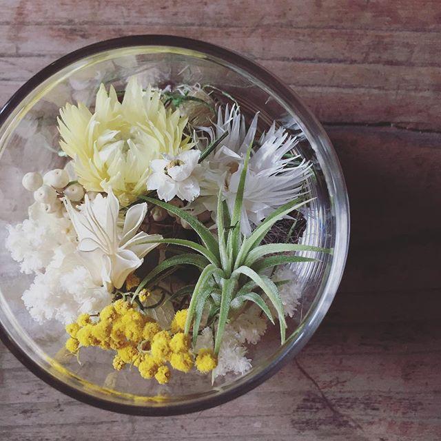 GREEN BUCKER × komeya cafe hatiboku __hatiboku _tillandsia & dryflower terrarium_spring ver