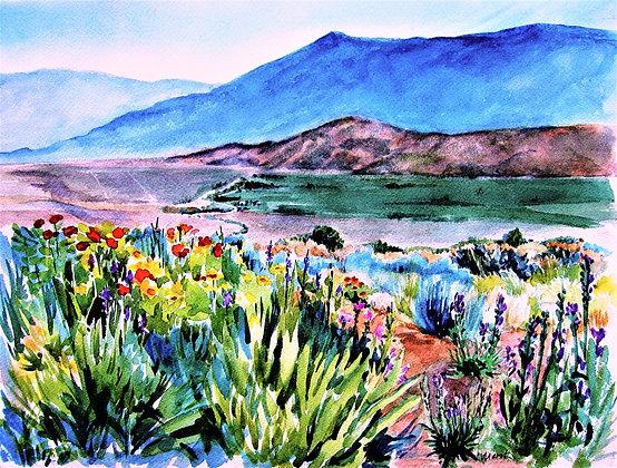 High Sierra Garden